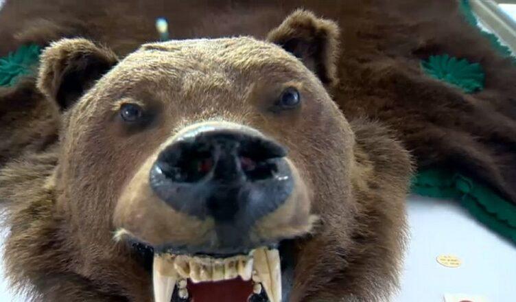oug de împuşcare a urşilor