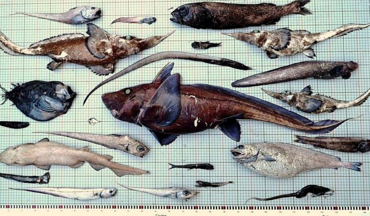 creaturi marine ciudate